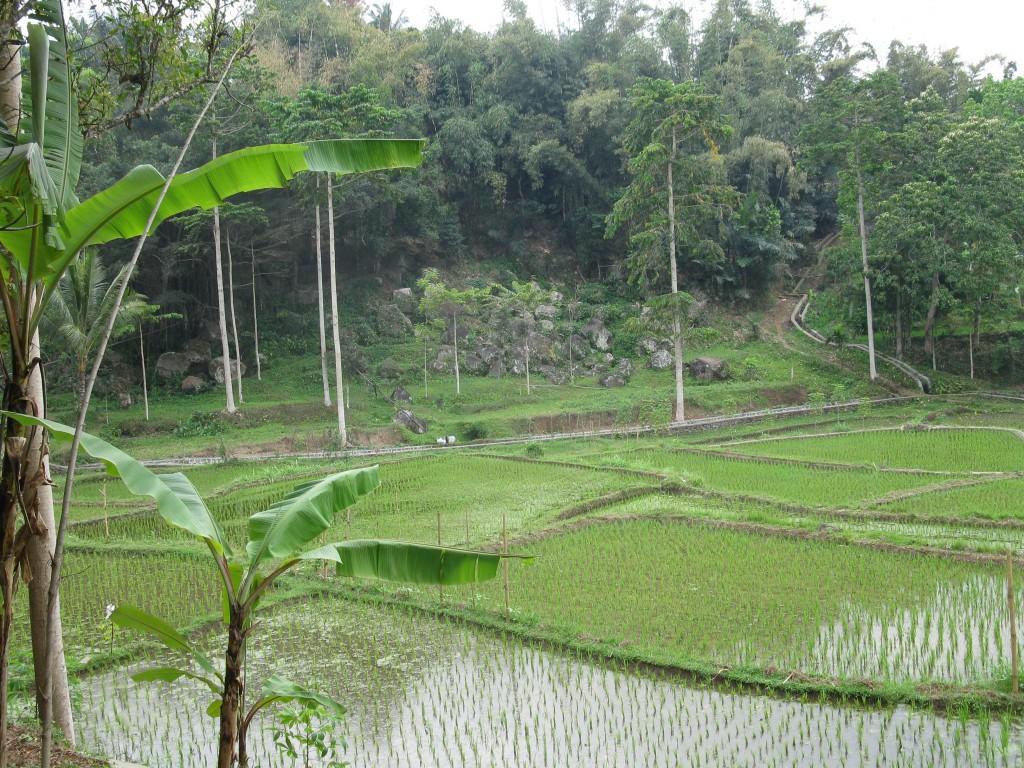 Sawah's in Tete Baru